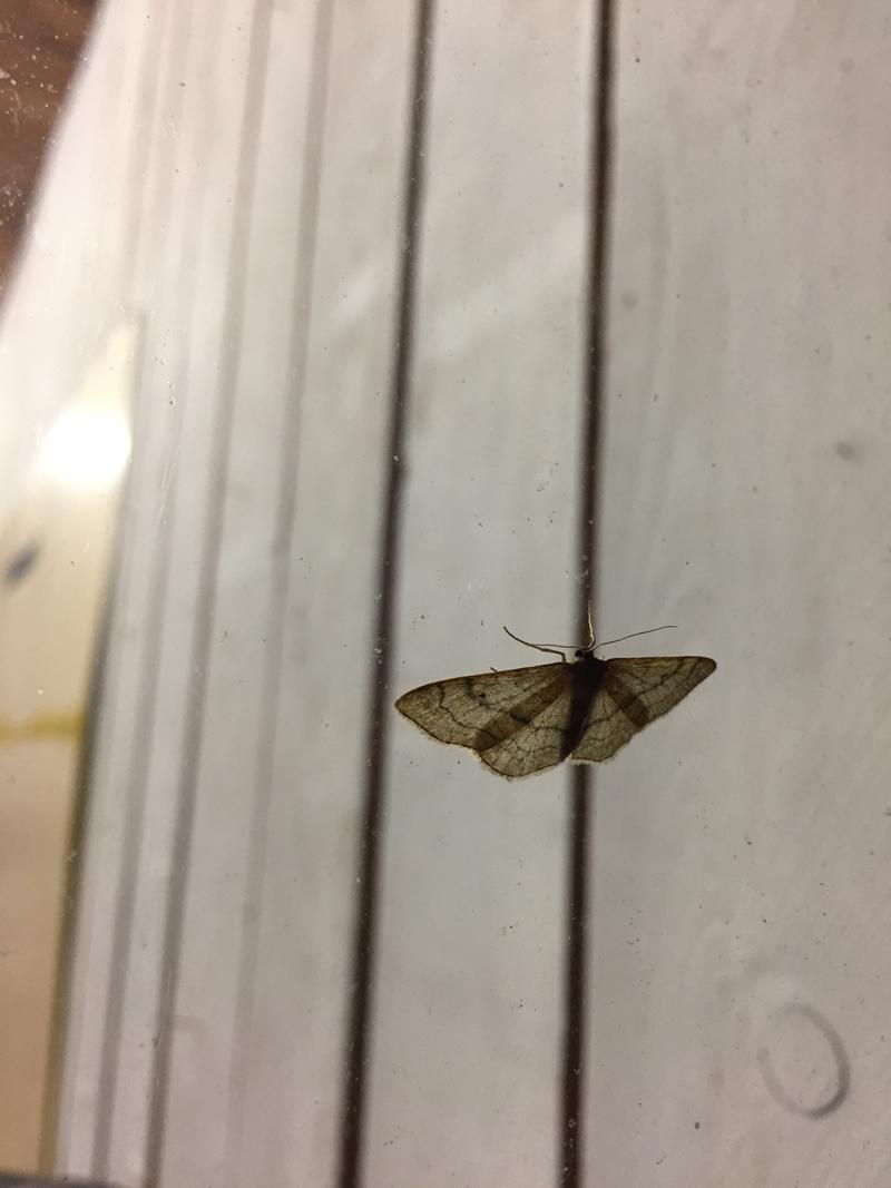 800_vlinder_2_stefan-cools