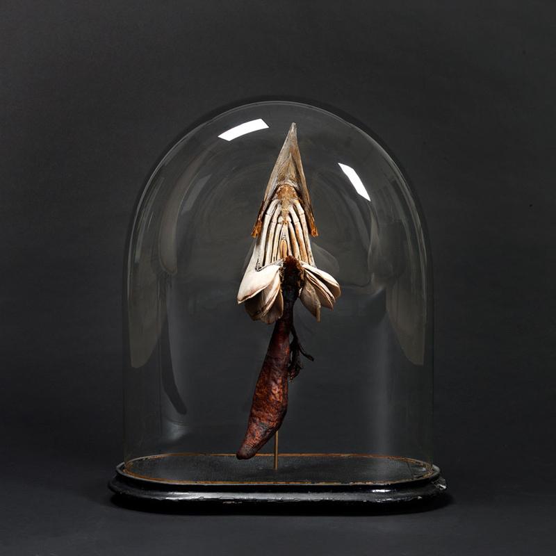 800_mandy-den-elzen-swordfish-digestion-system